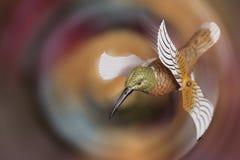 Изображения года сбора винограда птицы поддельные Стоковые Фото