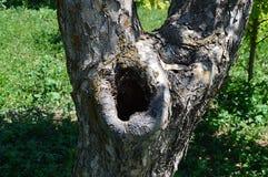 Изображения дерева высекаенные птицами Стоковые Изображения