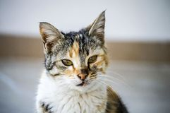 Изображения кота, милые изображения кота, глаз ` s кота, самые красивые глаза кота Стоковое Изображение RF