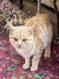 Изображения кота смотря в различных направлениях, добыче кота ждать, глаза кота, Стоковое Изображение