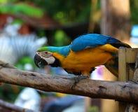 Изображения красивого покрашенного попугая в зоопарке, Азии Стоковое Фото