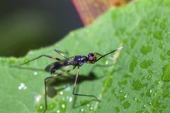 Изображения красивых насекомых макроса Стоковое фото RF