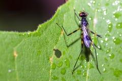 Изображения красивых насекомых макроса Стоковые Фото