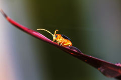 Изображения красивых насекомых макроса Стоковое Изображение RF