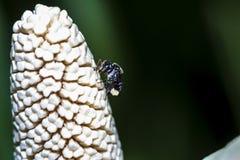 Изображения красивых насекомых макроса Стоковые Изображения RF