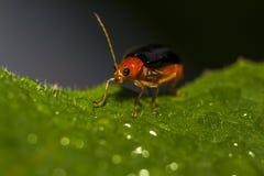 Изображения красивых насекомых макроса Стоковая Фотография