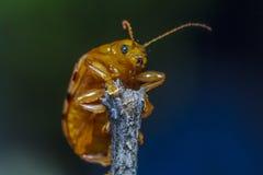 Изображения красивых насекомых макроса Стоковые Изображения