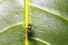 Изображения красивых насекомых макроса Стоковое Фото