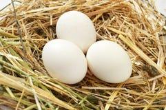Изображения отечественных кранов, изображения крана и цыплята, изображения естественных органических цыплят деревни, естественн-п Стоковая Фотография RF