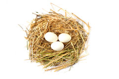 Изображения отечественных кранов, изображения крана и цыплята, изображения естественных органических цыплят деревни, естественн-п Стоковое фото RF