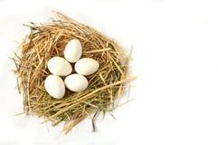 Изображения отечественных кранов, изображения крана и цыплята, изображения естественных органических цыплят деревни, естественн-п Стоковое Изображение RF