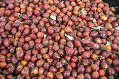 Изображения плода шиповника приносить высушенный в подносе, плоде шиповника засыхания, плоде шиповника засыхания для того чтобы в Стоковое Изображение RF