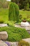 изображения сада также имеющегося пожалования цветя больше моего выигрывать весны утеса портфолио вертикального Различные кусты и стоковая фотография