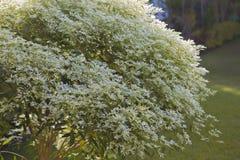 изображения фокуса bush нижняя часть близкого вверх Стоковое Изображение