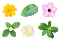 Изображения цветков и листьев Стоковая Фотография
