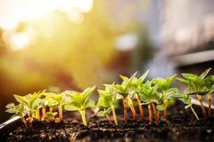 изображения экологичности принципиальной схемы еще многие мое портфолио Саженец растет от плодородной почвы Молодые заводы в подн стоковая фотография