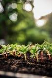 изображения экологичности принципиальной схемы еще многие мое портфолио Саженец растет от плодородной почвы Малая глубина поля Мо стоковые фото