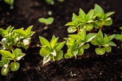 изображения экологичности принципиальной схемы еще многие мое портфолио Саженец растет от плодородной почвы Малая глубина поля Мо стоковое изображение rf