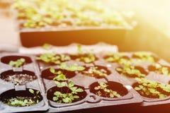 изображения экологичности принципиальной схемы еще многие мое портфолио Саженец растет от плодородной почвы Молодые заводы в подн стоковая фотография rf