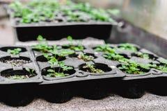 изображения экологичности принципиальной схемы еще многие мое портфолио Саженец растет от плодородной почвы Молодые заводы в подн стоковое изображение rf