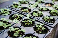 изображения экологичности принципиальной схемы еще многие мое портфолио Саженец растет от плодородной почвы Молодые заводы в подн стоковое фото rf