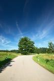 Изогните на дороге с зеленым деревом в центре стоковое изображение