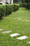 изогните путь прогулки на спортивной площадке, зеленой картине лужайки, na зеленой травы Стоковые Изображения