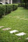изогните путь прогулки на спортивной площадке, зеленой картине лужайки, na зеленой травы Стоковые Изображения RF
