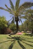 изогнутая вычурно пальма стоковая фотография