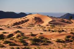 изогнутая дюна грациозно зашкурит Стоковые Изображения RF