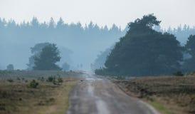 Изогнутая одиночная дорога майны в заповеднике с сосновым лесом стоковое изображение rf