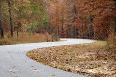 Изогнутая дорога с деревьями и листьями стоковые фотографии rf