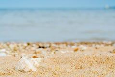Изогнутая раковина в кварцевом песке против голубого silh ` s моря и корабля Стоковые Фотографии RF