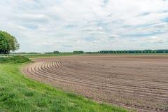Изогнутые гребни картошки в голландском ландшафте польдера Стоковое Изображение
