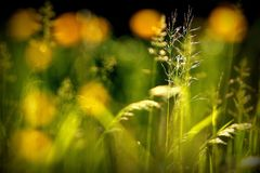Изогнутые заводы в солнце лета Стоковые Фото