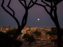 Изогнутые сосны и луна дурачка Стоковая Фотография
