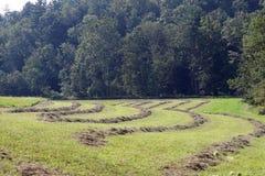 Изогнутые строки сена Стоковые Фото