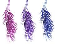 Изогнутые тропические листья ладони: пинк, пурпурный и голубой, изолированный на белой предпосылке Вися листья ладони стоковое изображение