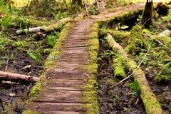 изогнутый путь v2 Стоковое Фото