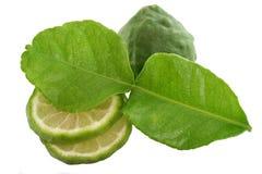 изолированная белизна известки листьев kaffir Стоковые Изображения RF