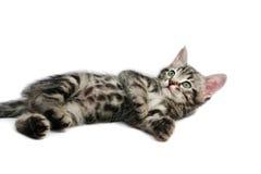 изолированная белизна котенка Стоковые Изображения
