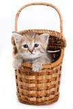 изолированная белизна котенка Стоковая Фотография