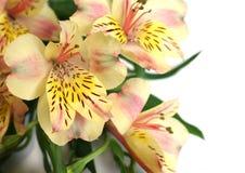 изолированная белизна орхидеи Стоковая Фотография RF