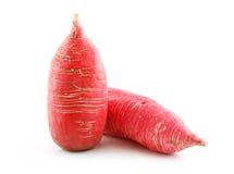 изолированная белизна редиски красная зрелая vegetable Стоковое Изображение RF