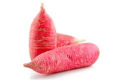 изолированная белизна редиски красная зрелая vegetable Стоковые Изображения