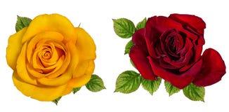 изолированная белизна розы Стоковые Изображения RF