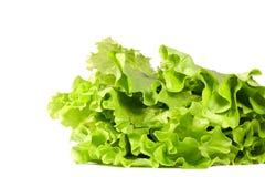изолированная белизна салата листьев стоковые фото