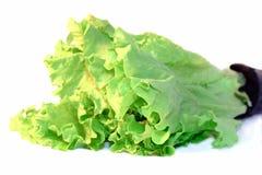 изолированная белизна салата листьев vegetable стоковые фотографии rf