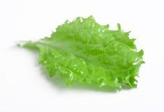 изолированная белизна салата Стоковые Фото