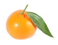 изолированная белизна tangerine Стоковое Фото